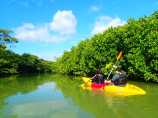超定番!天然記念物のマングローブ林を行くカヌーツアー