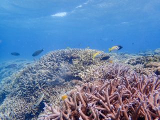 石垣島~西表島間のサンゴ礁 写真